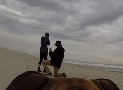 dog_captures_proposal