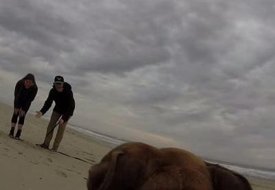 dog_captures_proposal_3