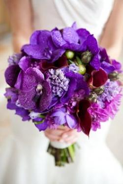 purple_vanda_orchids