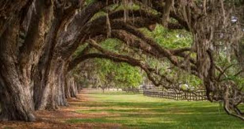 boone_hall_plantation_south_carolina_us_-_the_notebook