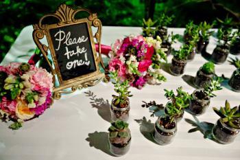 eco-friendly-wedding-guest-favors-succulents
