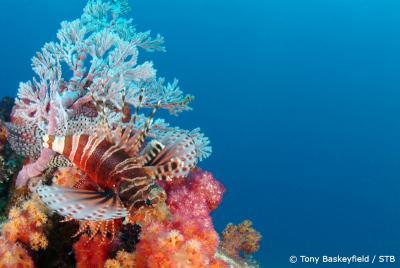 underwater_seychelles