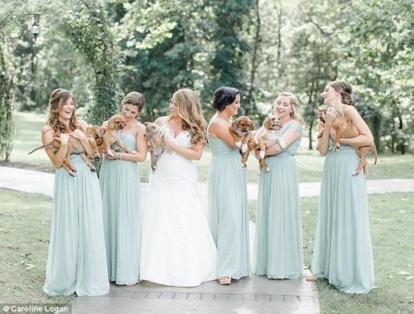 bride_with_puppies