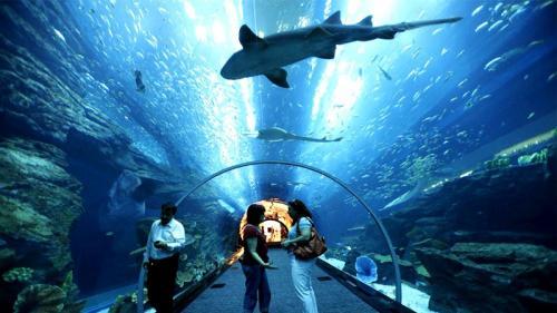أجمل الجزر الماليزية جمالاً وطبيعة underwater_world_lan