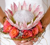 A Dramatic Wedding Flower: The Protea