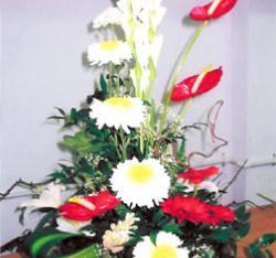 Al Qariah Flower Trading