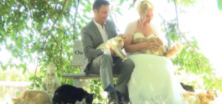 Canadian Couple Invites 1000 Cats to Their Wedding