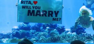 طلب زواج تحت الماء في المالديف