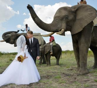 Exotic Animals are the New Hot Wedding Trend in 2015