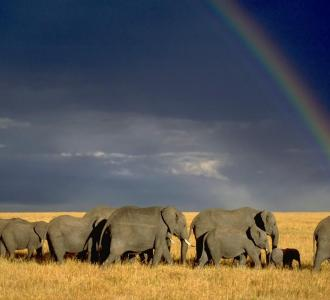 شهر عسل مليء بالمغامرة في كينيا