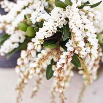 أحدث صيحات بوكيهات ورد للعرايس: أزهار أندروميدا