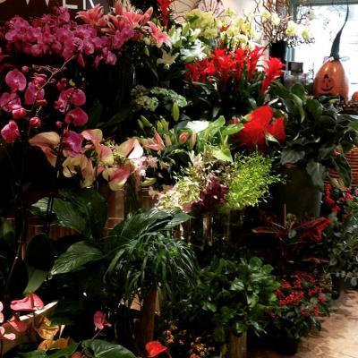 أشهر محلات الورد في مسقط