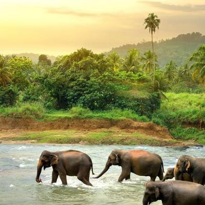 Honeymoon Destination: The Beautiful Island of Sri Lanka!