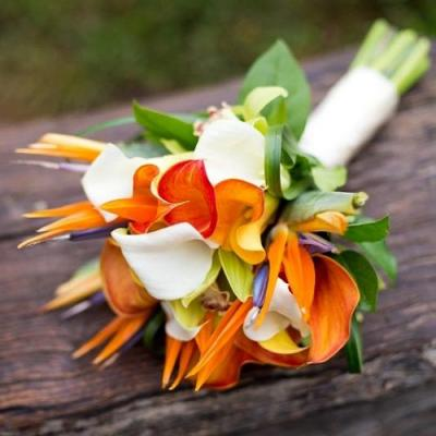 A Wedding Favorite: The Bird of Paradise Flower