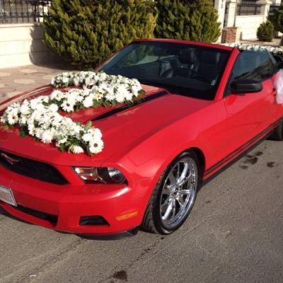 Rozana Car Renting