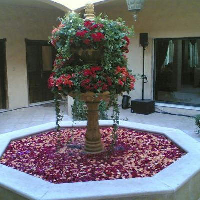 أزهار ماسايا