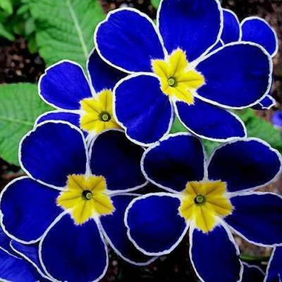 Al Zunbaq Flowers