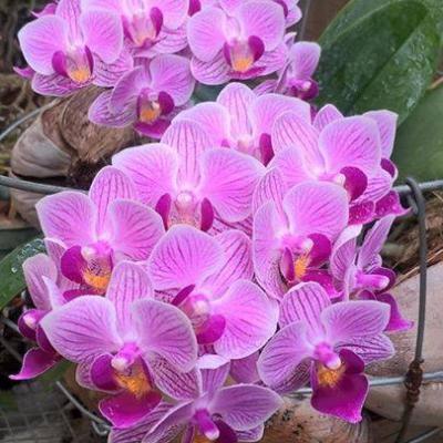 Dubai Fresh Flowers