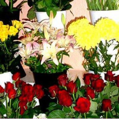أزهار شامي روزا