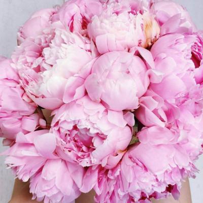 Asfar Flowers