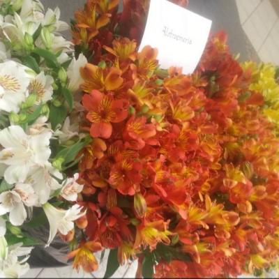 Bloomax Flowers