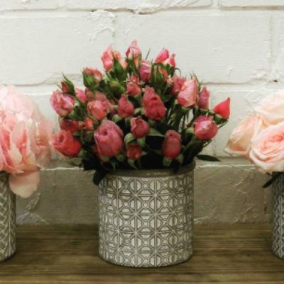 Pino Flowers