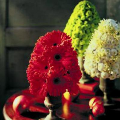 Tulipia's Sense Flowers