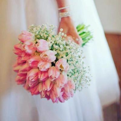 FS Anthurium Flowers