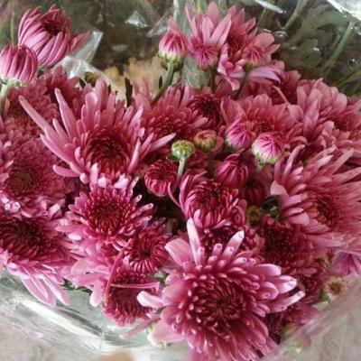 Badawi Flowers Farm