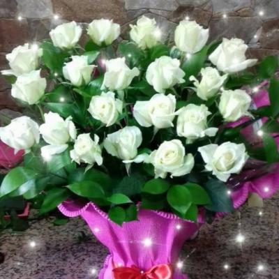 Fleuriste Mustapha  - Pépinière Gambetta