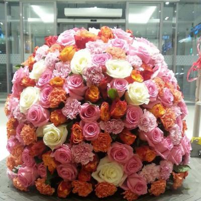 زهور بلاك تيوليب