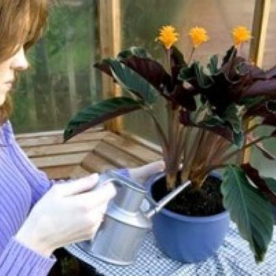 Taking Care of Houseplants in Winter