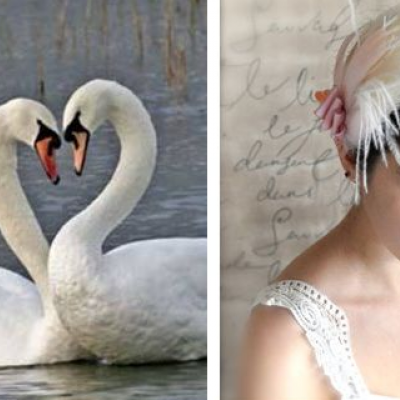 An Elegant Swan Wedding Theme