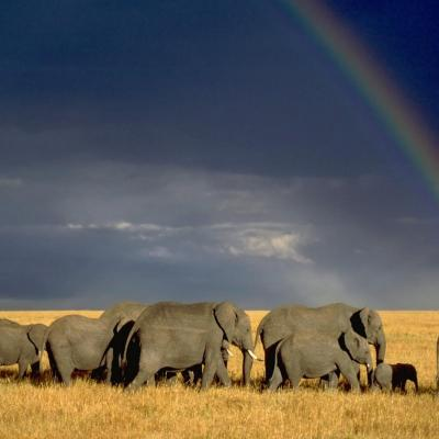 Discover The Magical Kenya On Your Honeymoon