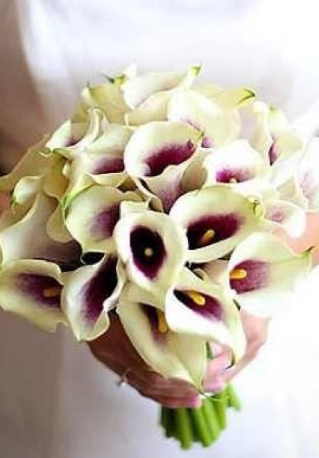 Cala Lily Wedding Theme 3