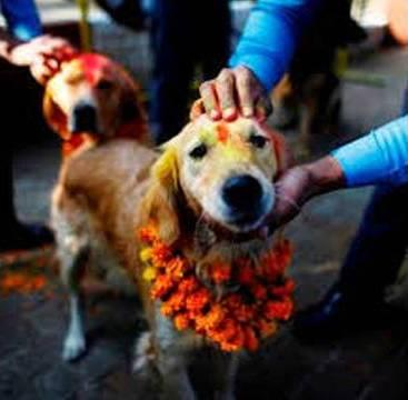 Over 5k Guests Attend a Wedding for a Dog