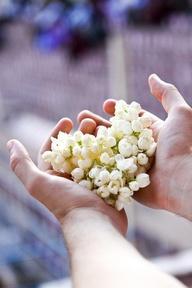 Delicate Wedding Flower: Jasmine