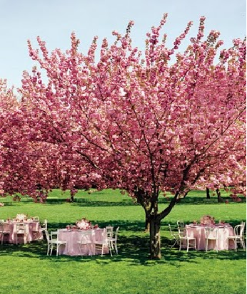 Cherry Blossom Wedding Theme!