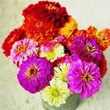 Zinnia Flowers for a Fun and Colorful Wedding