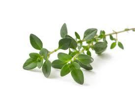 Beauty Benefits of Thyme