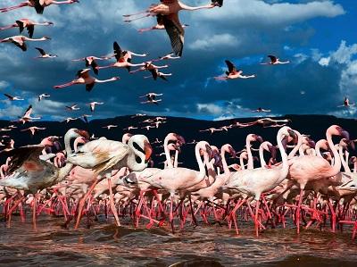 flamingos-lake-bogoria-kenya_